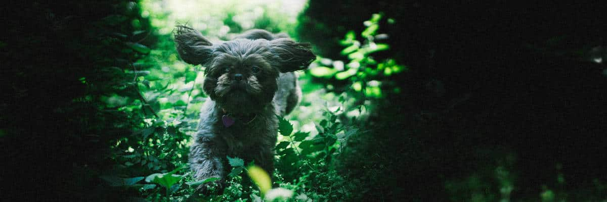 Shih-poo Central for Shih-poo questions and tips
